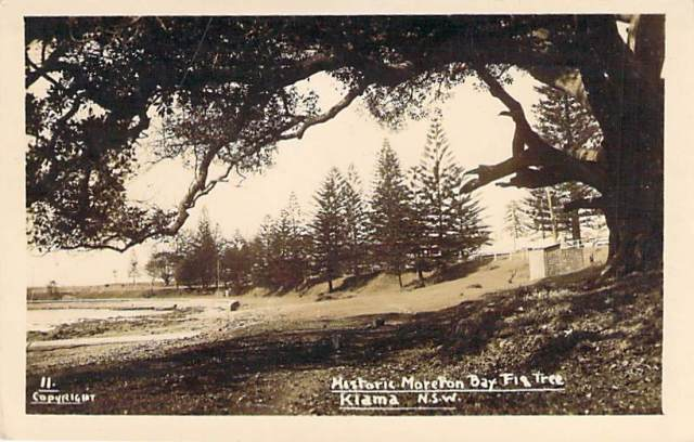 Historic Moreton Bay Fig Tree Kiama NSW Front